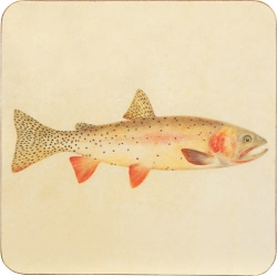Cutthroat Trout Coaster - Set of 4