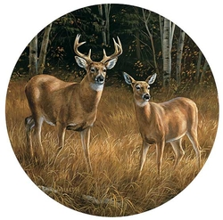 Whitetail Deer Coasters - Set of 4